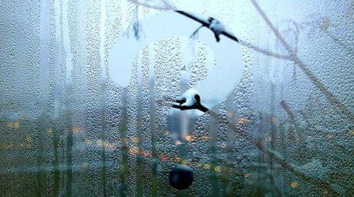 Потеют окна зимой
