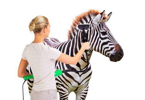 правильно ухаживать за зеброй